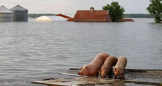 Kako pobediti poplavu: S verom u Boga