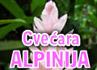 CVEĆARA ALPINIJA