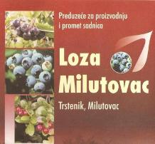 RASADNIK VOĆNIH SADNICA LOZA MILUTOVAC DOO KRUŠEVAC TRSTENIK SRBIJA